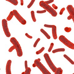 Red bacteria inside the body on a white isolated background