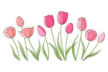 Collection of hand drawn vector tulips isolated on white