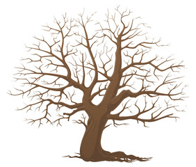 Tree without leaves. Dry wood.