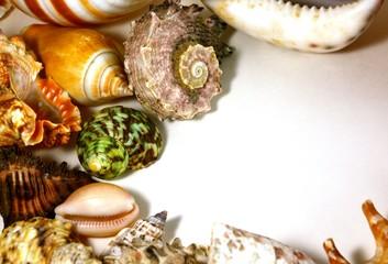 Multicolored sea shells bordering a light background.