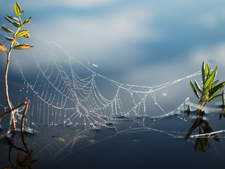 Spider's web on the water