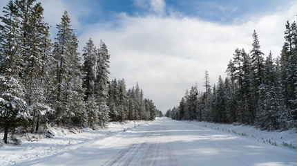 Iced Two Lane Asphalt Road Leads Through Forest Wintertime