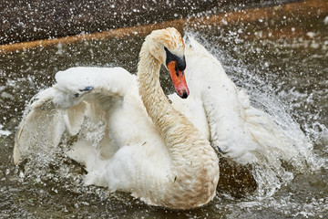 Swan beading
