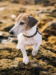 Dog posing on stone