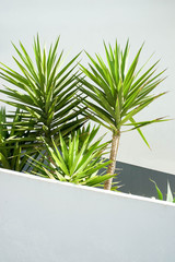 Palm tree leaves against white wall