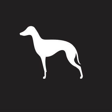 Silhouette of italian greyhound