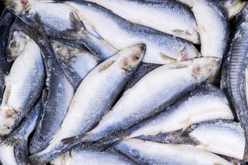 Frozen herring. Frozen group of fish. iced atlantic fish. Herrings. Herring pattern.Herring texture.