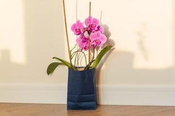 Flowers surprise in the gift bag. Pink orchid indoors on the floor, background light solar wall, copy space.