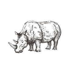 Hand drawn rhino. Sketch, vector illustration.