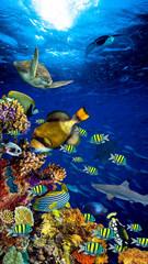 Fototapeta premium kolorowa szeroka podwodna rafa koralowa 16to9 pionowa tapeta na smartfona z wieloma rybami, żółwiami i życiem morskim / Unterwasser Korallenriff Hintergrund vertikal hochformat 16zu9