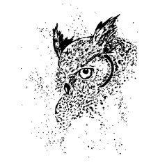 owl, isolated vector illustration