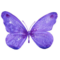watercolor purple  butterfly