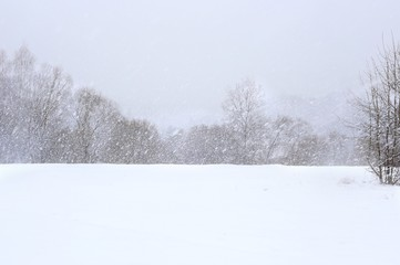 Winter snowfall background. Snowflakes falling on trees. Snow in forest. Nature landscape.