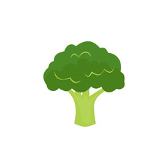Broccoli Isolated on White. Flat Design Style. Vector illustration