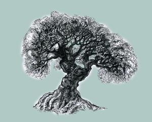 Ветвистое дерево.