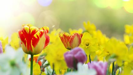 Frühlingsboten.