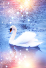 Wall Mural - a swan in magic light on mystical lake like a concept of wonder of nature, magic, divine, beauty