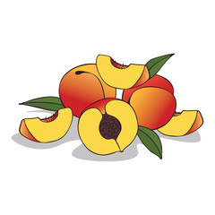 Isolate ripe peach fruit on white background. Close up clipart with shadow in flat realistic cartoon style. Hand drawn icon