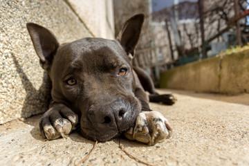 black sad dog lying