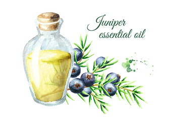 Juniper essential oil. Watercolor hand drawn illustration, isolated on white background