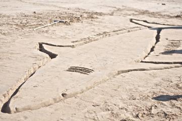 Shark Drawing on Beach