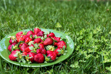 Ripe organic strawberries on the plate on green grass