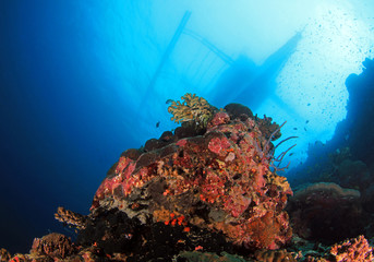 Coral Reef and Bangka Boat from Below. Pescador Island, Moalboal, Philippines