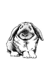Graphical sketch of rabbit isolated on white background,vector illustration