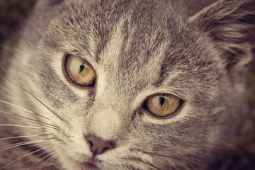 Feline face - close up view