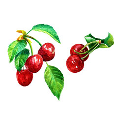 Cherry, a set of berries with leaves.