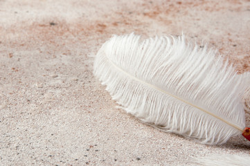 White ostrich feather on concrete background