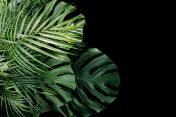 Tropical leaves Monstera philodendron, fern and palm leaves ornamental foliage plants flora arrangement nature backdrop on black background.