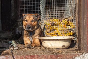 Dog near a large bowl