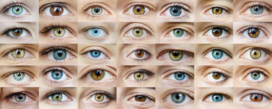 Eyes are many