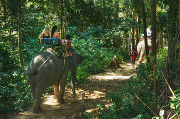 Riding on the elephant through the jungle in the Khao Lak national park in Thailand