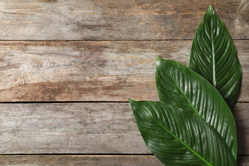 Big leaves of tropical banana palm on wooden background
