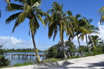Palm trees lining the shore of island with small dock, blue sky.