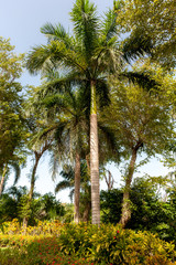 Green Palm Trees, Tropical Island