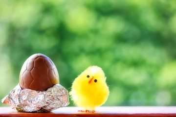 Cute Fluffy Chick And Chocolate Egg For Easter