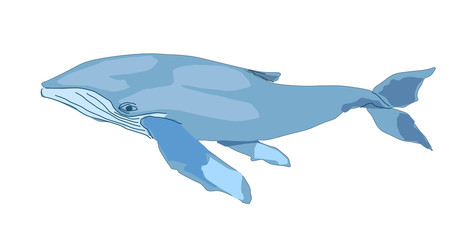 blue whale isolated on white backgrount. vector illustration