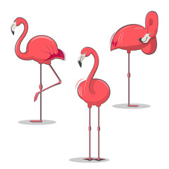 Set of pink flamingos bird in different poses. Tropical birds vector illustration