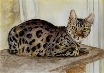 lying bengal cat