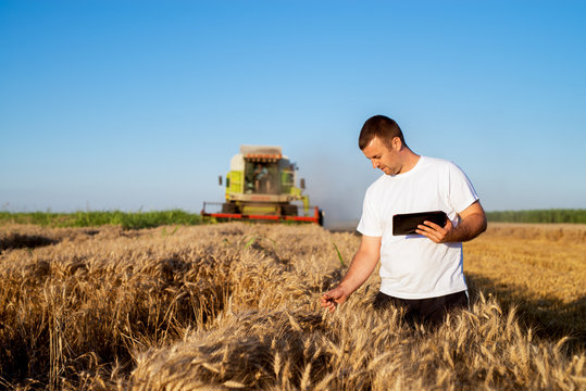 Young agronomist man standing in a golden wheat field with tablet and checking quality while combine harvester working behind.