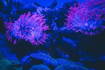 Méduse phosphorescente