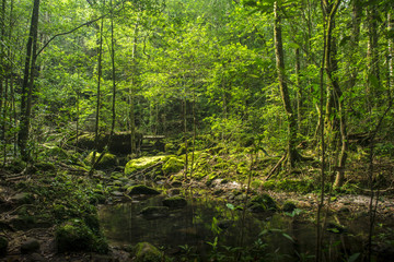 Background of a scenic forest of fresh green trees and clean stream.