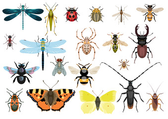 Insect collection, illustration, drawing, vector