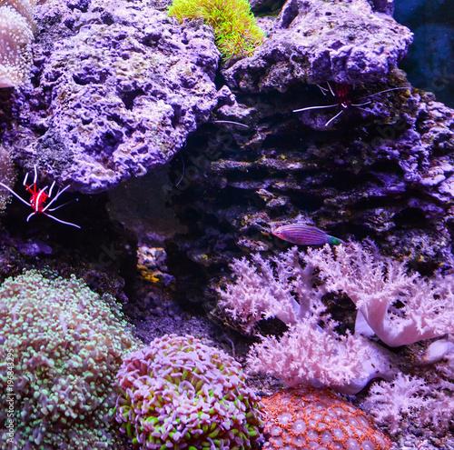 Reef tank, marine aquarium full of fishes and plants  Tank