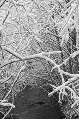 Wald mit Bäumen die von Schnee bedeckt sind über Fluss mit wasser