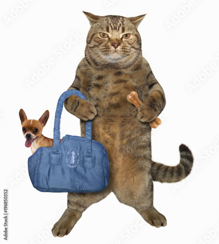 The cat holds a bone and a bag in which his dog is in. White background.