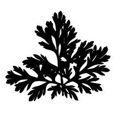 Wild herb silhouette.